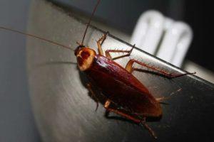 Дезобработка помещения от тараканов