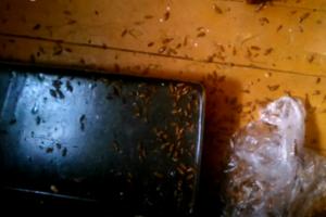 Служба по уничтожению тараканов в квартире M-ED.RU