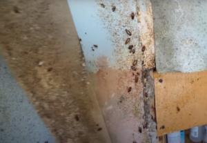 Обработка от тараканов в Москве недорого