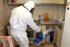 Провести дезинфекцию от тараканов в Москве