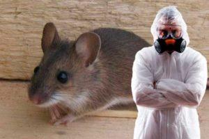 Уничтожение тараканов крыс в Москве