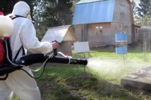 Уничтожение насекомых клещей в московской области