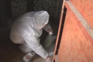 Эффективное уничтожение крыс в Москве дешево