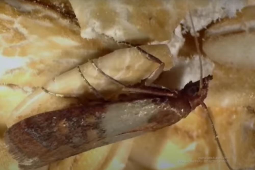 Борьба с молью в квартире в Москве недорого