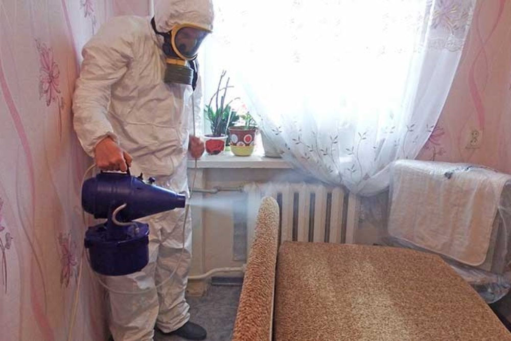 Борьба домашней молью в Москве недорого