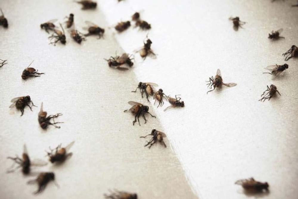 уничтожение тараканов и мух