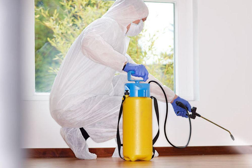 Дезинфекция от муравьев в квартире в Москве недорого