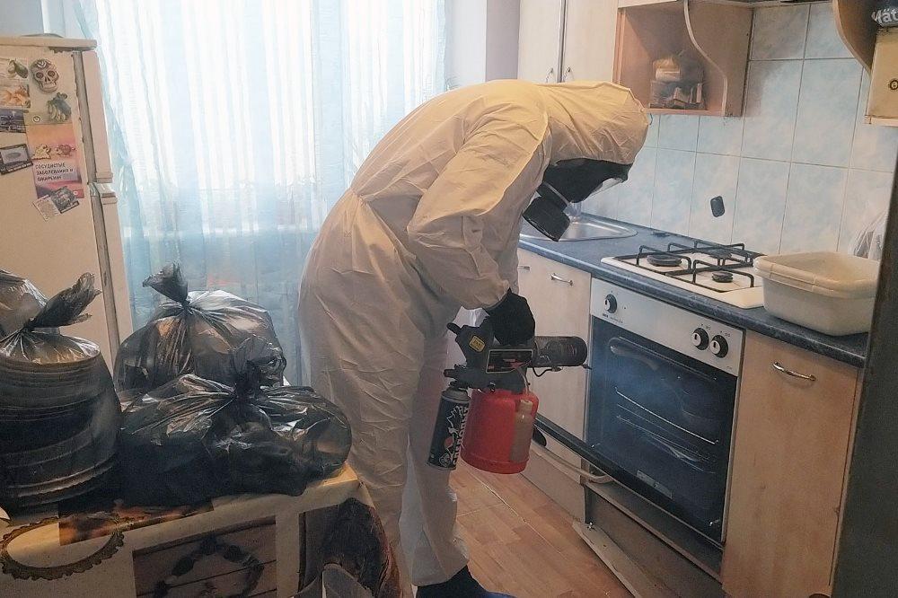 дезинфекция от муравьев в квартире