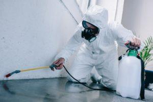 Профессиональная Дезинфекция от муравьев в квартире в Москве