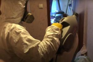 Уничтожение насекомых клопов тараканов муравьев в Москве недорого