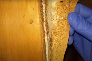 Борьба с муравьями в квартире в Москве дешево