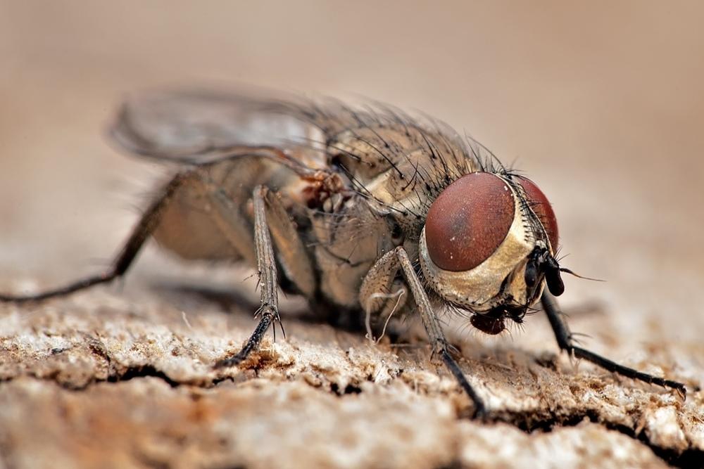 Уничтожение мух в Москве