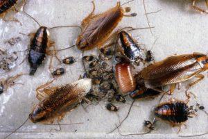 Дезинфекция уничтожение насекомых в Москве