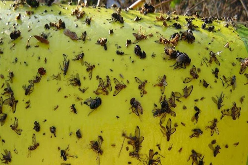 Эффективное уничтожение мух