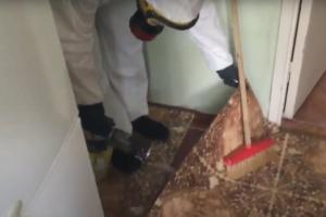 Профессиональное уничтожение мокриц в квартире санэпидемстанция
